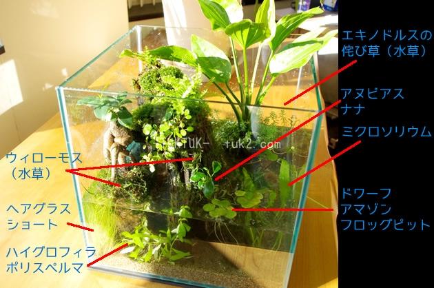 水中植物一覧_GF