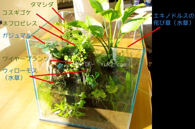 陸上植物一覧_GF_1